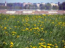 Dandelions and red light against runway Royalty Free Stock Photos
