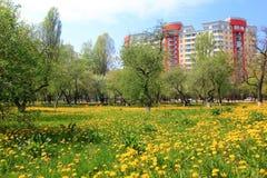 Dandelions and residential area in Kiev Stock Photo