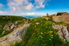 Dandelions among the rocks in Carpathian Alps. Heavy cloud on a blue sky over the mountain peak in the distance.  Vivid summer landscape at sunset Royalty Free Stock Photography