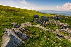 Dandelions among the rocks in Carpathian Alps. Dandelions among the rocks. Dramatic summer landscape in Carpathian Alps Stock Images