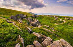 Dandelions among the rocks in Carpathian Alps. Heavy cloud on a blue sky over the mountain peak in the distance.  Vivid summer landscape at sunset Royalty Free Stock Images