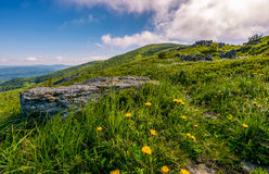Dandelions among the rocks in Carpathian Alps. Heavy cloud on a blue sky over the mountain peak in the distance.  Vivid summer landscape at sunset Stock Photography