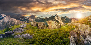 Dandelions among the rocks in High Tatra mountains. Composite panorama of dandelions among the rocks in High Tatra mountain ridge in the distance. Beautiful Royalty Free Stock Images