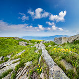 Dandelions among the rocks on hillside Royalty Free Stock Photography