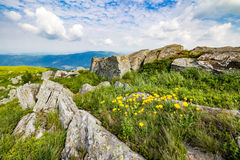 Dandelions among the rocks on hillside. Yellow dandelions in the grass among the huge rocks on hillside in high mountains Royalty Free Stock Image