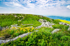 Dandelions among the rocks on hillside. Yellow dandelions in the grass among the huge rocks on hillside in high mountains Stock Photo