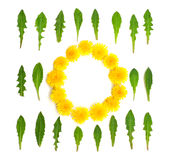 Dandelions round frame white background Royalty Free Stock Photography