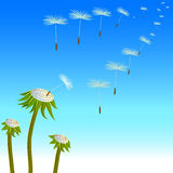 Dandelions seeds on the wind Stock Photos
