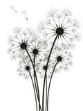Dandelions Royalty Free Stock Image
