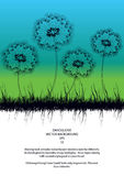 Dandelions silhouettes Royalty Free Stock Image