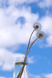 Dandelions in the sky Royalty Free Stock Photography