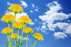 Dandelions On Sky Stock Photos