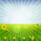 Dandelions at spring Stock Image