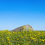 Dandelions and stone on skyline Royalty Free Stock Photo