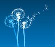 dandelions stylizowali biel wiatr Zdjęcia Royalty Free