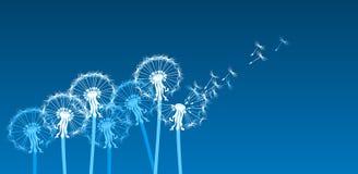 dandelions stylizowali biel wiatr Zdjęcia Stock