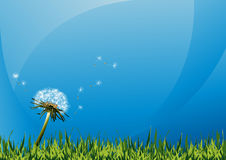 Dandelions on summer field. Vector illustration, AI file included Stock Photo