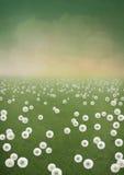 Dandelions tła pole ilustracja wektor