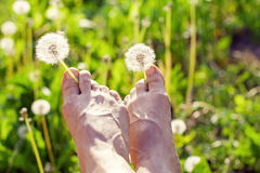 Dandelions between toes Royalty Free Stock Photography