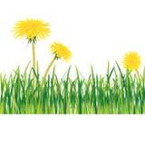 dandelions trawa Obrazy Stock
