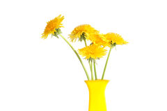 Dandelions In Vase. Nice yellow vase with few dandelions on white background Stock Image