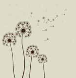 Dandelions. Vector. Decoration with dandelions. Vector illustration Stock Images