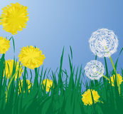 Dandelions, vector Royalty Free Stock Photography