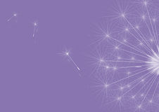 Dandelions violet Stock Images