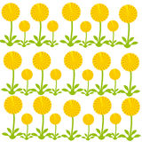 Dandelions on white background. Vector illustartion Stock Photography
