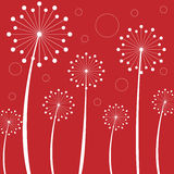 Dandelions. White dandelions on a red background Royalty Free Stock Images