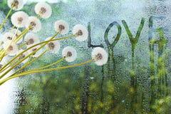 Dandelions in white vase Stock Image