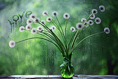 Dandelions in white vase. On the window Royalty Free Stock Photo