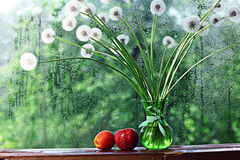 Dandelions in white vase. On the window Stock Images