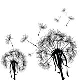 Dandelions in the wind vector illustration