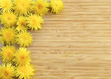 Dandelions on Wood with Copy Space Royalty Free Stock Image