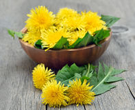 Dandelions on wooden table Stock Image