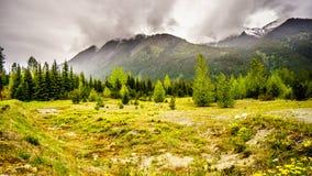 Dandelions wzdłuż Duffy jeziora drogi Zdjęcia Royalty Free