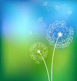 Dandelionsn in meadow spring  Royalty Free Stock Photo