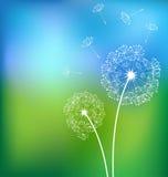 Dandelionsn in meadow spring  Royalty Free Stock Photo