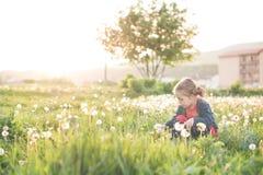dandellion领域的小女孩 免版税库存图片