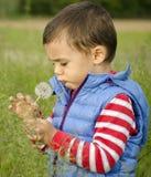 Dandellion de sopro da criança Foto de Stock Royalty Free