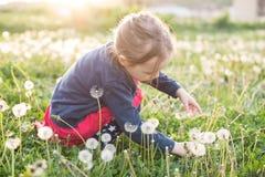 Dandellions de cueillette de petite fille image libre de droits