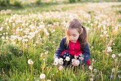 Dandellions de cueillette de petite fille photos libres de droits