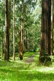 dandenong δασικές σειρές Στοκ Εικόνα