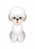 Dandie Dinmont Terrier Photographie stock