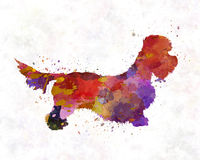 Dandie Dinmont Terrier im Aquarell Stockfotos