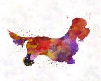 Dandie Dinmont Terrier in watercolor Stock Photos