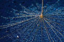 Dandilion seed on a blue surface Royalty Free Stock Photos