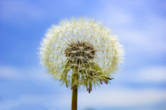 Dandilion in the sky Royalty Free Stock Photos