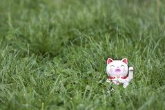Dando boas-vindas ao gato Imagem de Stock